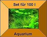 3 Töpfe + 3 Bund Wasserpflanzen, Aquarienpflanzen
