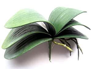 Orchidea Phalaenopsis artificiale con foglie