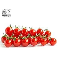 Go Garden & # 39; Renrong & # 39; Brillante Rojo Tomate Cereza reliquia Dulce Redondo Sabroso Pequeño Para Jardín de Alta Germinación -20Pcs / Pack