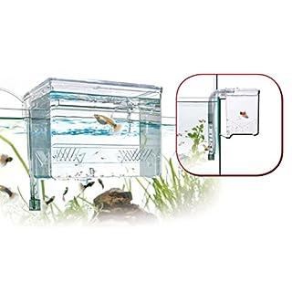 AQUARISTIKWELT24 Breeding Box Größe L Maße 17x13x13 Aufzuchtbecken mit Frischluft Zufuhr Abschluss Ablaichkasten Ablaichnetz Zuchttank Aufzucht Fische Top Qualität
