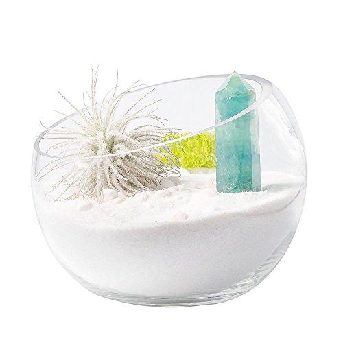Mkouo Schräge Glas Vasen Ø15 cm Kugelvase Flasche Terrarium Plant Glass Pot für Succulents und Air Pflanzen Sukkulente Display Glasvase