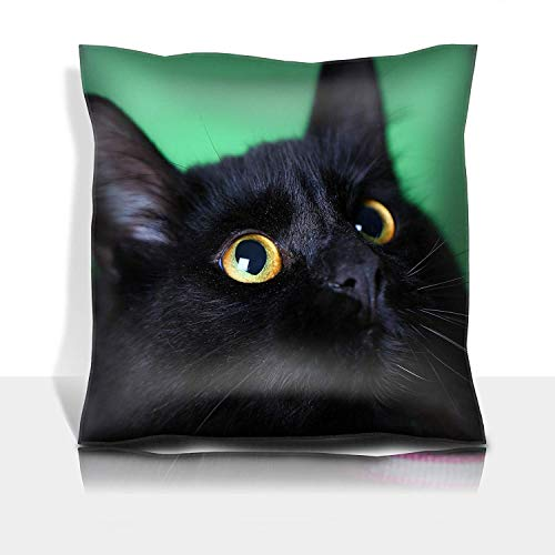 MSGDF Throw Pillowcase Cotton Satin Comfortable Decorative Soft Pillow Covers Protector Sofa 18x18 1 Pack Closeup View of a Domestic with Long Hair Against a Green ()
