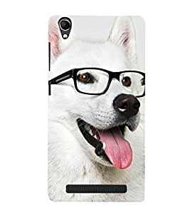 Dog with Reading Glasses 3D Hard Polycarbonate Designer Back Case Cover for Intex Aqua Power Plus :: Intex Aqua Power +