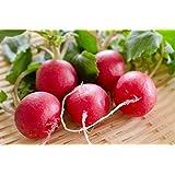 AGROBITS Campione Ravanello 100 semi Gourmet dolce Crisptasty Heirloom di mercato o di casa