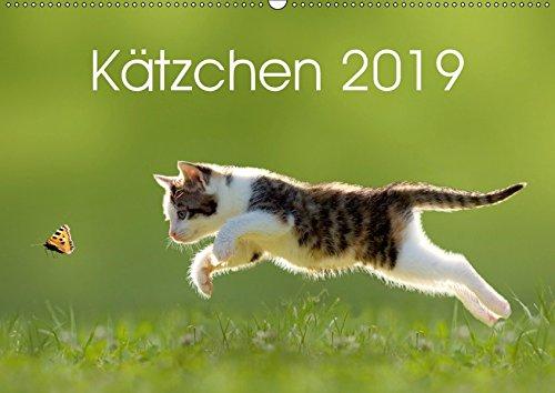 Kätzchen 2019 (Wandkalender 2019 DIN A2 quer): Katzenkalender mit abwechslungsreichen und stimmungsvoll gestalteten Bildern passend zur Jahreszeit. (Monatskalender, 14 Seiten ) (CALVENDO Tiere)