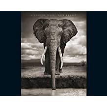 [(A Shadow Falls)] [By (author) Nick Brandt ] published on (September, 2009)