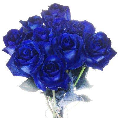 10 blaue Rosen – langstielig und vasenfertig