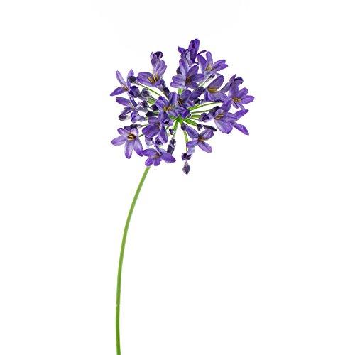 artplants Künstlicher Agapanthus PHILINA, blau, 75 cm, Ø 14 cm – Deko Blume