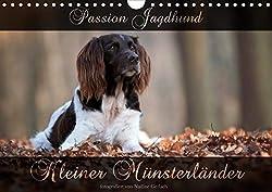 Passion Jagdhund - Kleiner Münsterländer (Wandkalender 2020 DIN A4 quer)