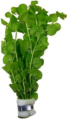 Lysimachia nummularia Pfennigkraut, Aquarien- Teichpflanze von aquariumpflanzen.net - Du und dein Garten