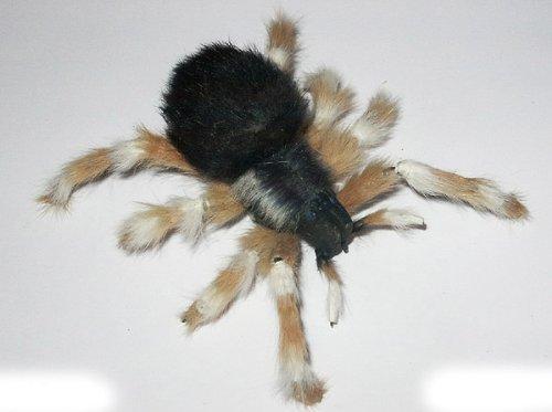 magnetische Spinne, Spinnenmagnet, Insektenmagnet, geile Geschenkidee für Halloween und Karneval (Geile Halloween)