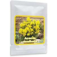 Silberakazie 25 Samen/Pack - Falsche Mimose - Acacia dealbata - ein edles mediterranes Gehölz für Haus, Garten, Terrasse und Balkon