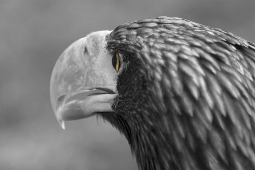 berlin-wallpaper-photo-wallpaper-animals-giant-sea-eagle-wallpaper-on-demand-no-6464-fleece-3255-x-2