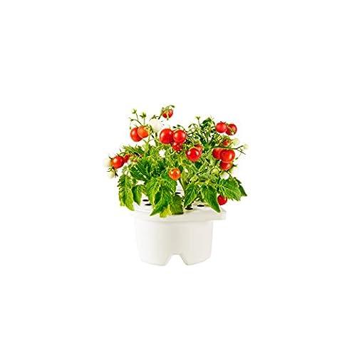 Click & Grow Mini Tomato Refill Cartridge for Smartpot