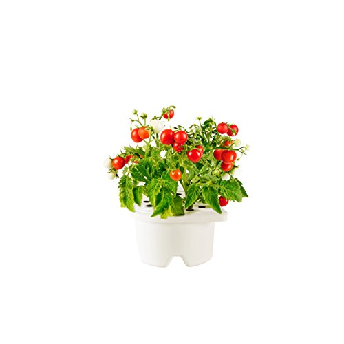 Click & Grow Smartpot Mini Tomato Refill Cartridge