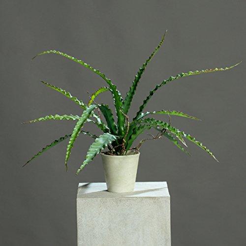 Nestfarn im weißen Topf 55 cm Kunstpflanze von DPI