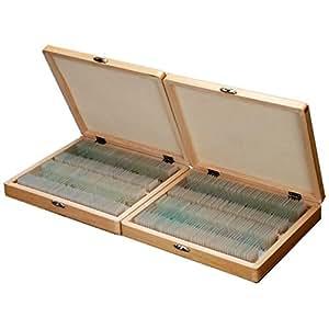 AmScope 200pc Home School étudiant Basic biologie Science lamelles préparées pour Microscope avec boîte en bois cas