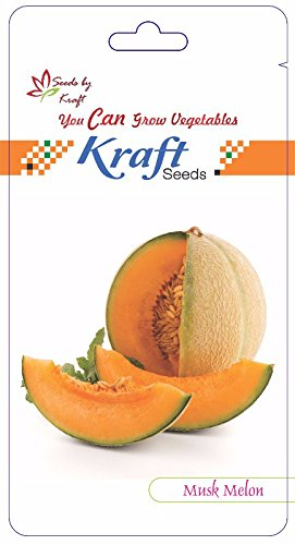 Musk melon F1 Hybrid (50 seeds) By Kraft Seeds