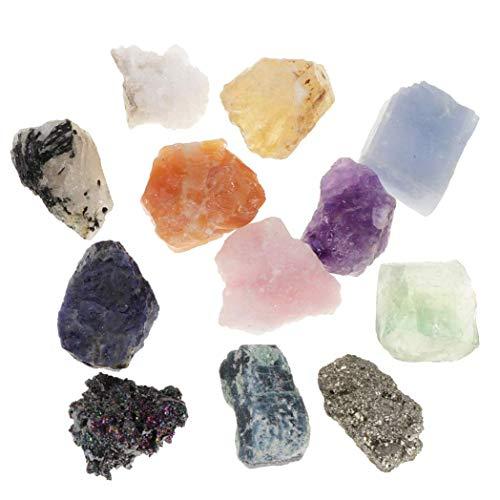 Myriad Choices 12x Caja de Espécimen de Minerales y Rocas Piedras Preciosas Juguete de Ciencias de Tierra