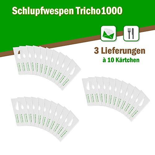 Der Motten-Shop Schlupfwespen gegen Lebensmittelmotten 10 Stück 1000-er Kärtchen 3 Lieferungen 2-tier-chip