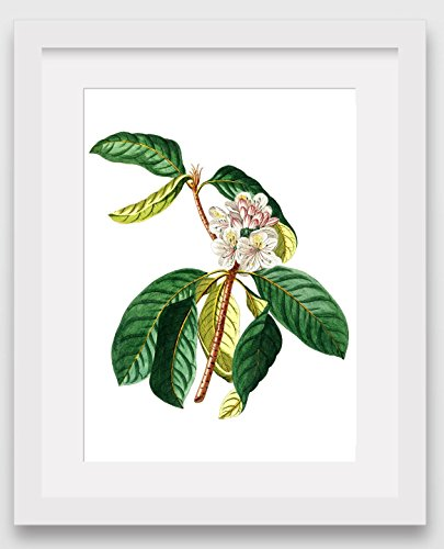 wild-flower-print-botanical-rhododendron-plant-8-x-10-inches-unframed