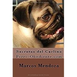 Secretos del Carlino: Perro-Obediente.com