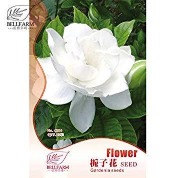 Pinkdose® 2018 Heißer Verkauf Davitu Gardenia Cape Jasmin Weiße Blumen, 20 stücke Bonsai Samen, Starke Duftende Doppel Blütenblätter für Hausgarten -