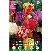 Holland Park bulbi da fiore di molte varietà e colori in sacchetto blister con foto (TULIPANI PAPPAGALLO MIX 5 bulbi)