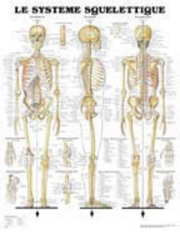 The Skeletal System Chart in French/Le Systeme Squelettique par Anatomical Chart Company