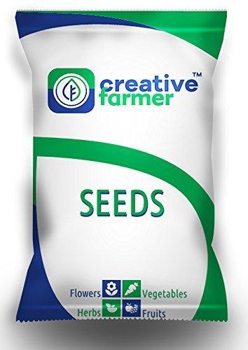 Pinkdose® Blumensamen: Celosia Argentea Blumensamen für Korb-Samen für Garten-Garten [Haus-Garten-Samen Eco Pack] Pflanzensamen von