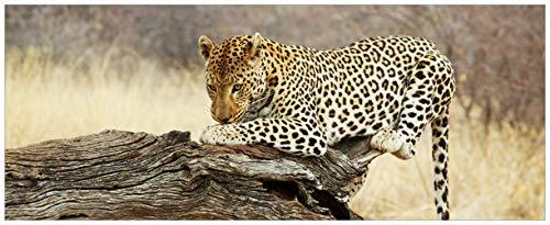 Wallario Acrylglasbild Leopard auf Baumstamm in Afrika - 50 x 125 cm in Premium-Qualität: Brillante Farben, freischwebende Optik
