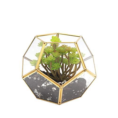The Fellie Glas Blumentöpfe für geometrischer Pentagon-Form offen Sphärisch als Blumentopf für Miniatur-Bonsai Übertopf für Balkon, Tischdeko Terrarium für Sukkulente, Kakteen