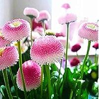 10 STÜCKE Plumeria samen Frische samen mischen farben Garten Pflanzen Anlage DE