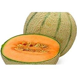 Melon Cantaloupe Hearts of Gold - Melone Hearts of Gold - 10 Samen
