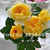 Vista Rare Fleur Rose/Rosas Graine Coloré Drôle Bonsaï Plante BRICOLAGE Maison Jardin Balcon Terrasse Plantation Haute Qualité Fleur 150 Pcs 7