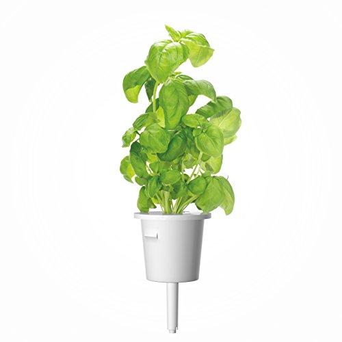 Click & Grow CLIC_BASILIC_REFIL Pack de 3 Recharges pour Jardinière Blanc 15 x 4 x 4 cm
