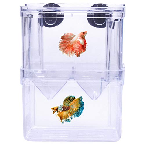 Fodlon Fish Zucht Isolation Box,Kunststoff Fisch Isolation Box multifunktionale Zuchttanks Brutkasten Inkubator Box mit 2 Saugnapf für Aquarium