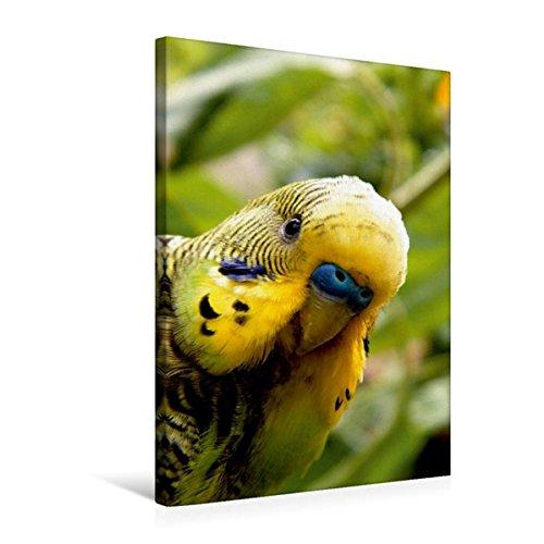 Premium Textil-Leinwand 50 cm x 75 cm hoch, Wellensittich Portrait | Wandbild, Bild auf Keilrahmen, Fertigbild auf echter Leinwand, Leinwanddruck: Ein .Wilde Wellensittiche (CALVENDO Tiere) (Käfige Reise-vogel Für Papageien)