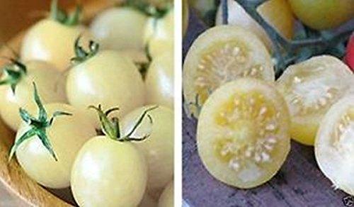 PLAT FIRM Germinazione dei semi: 25 - Semi: Semi Snow White Cherry Tomato - impianti produttivi folte! Dolce e saporito!