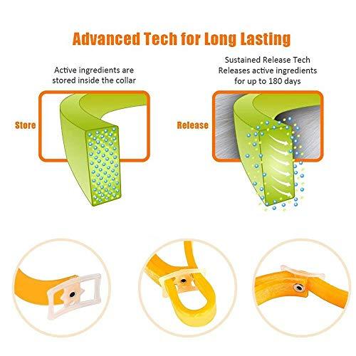 Zoom IMG-3 foonee regolabile pet flea collar