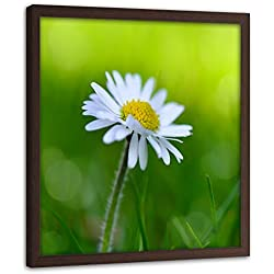 F FEEBY WALL DECOR Impresión Enmarcado marrón Margarita Cuadro Flor Verde 40x40 cm