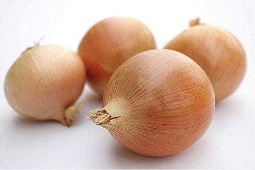brown-bulb-onion-stuttgarter-riesen-allium-cepa-l-vegetable-plant-seeds-large-popular-heirloom