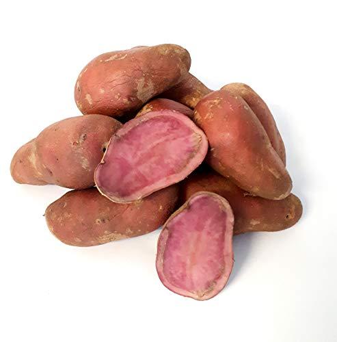 Kartoffeln Emmalie halbmehlig vorwiegend festkochend rote Kartoffeln 1-25 Kg deutsche Speisekartoffel perfekt zum grillen, braten, dünsten, pürieren optimal für selbstgemachte Pommes Frites (2)