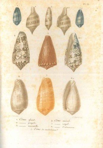 conchyliologie-leons-lmentaires-sur-lhistoire-naturelle-des-animaux-prcedes-dun-aperu-gnral-sur-la-z