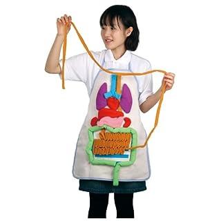 Artec 8734 Anatomie Sch-rze Packung mit 2 St-ck