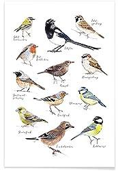 "Juniqe® Kinderzimmer & Kunst für Kinder Vögel Poster 20x30cm - Design ""Plakat Vögel"" entworfen von Janine Sommer"