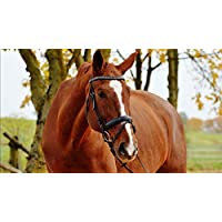ClassicJP 1000Piece Jigsaw Puzzle Brown Horse Animal For Grown Ups Adults Hobby Home Decoration Diy