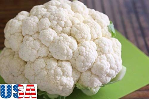 PLAT FIRM GRAINES DE GERMINATION: 1000 graines: USA VENDEUR Erfurt Chou-fleur 100-1000 HEIRLOOM NON OGM