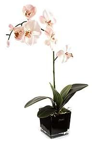 Peony 7132, Phalaenopsis-Orchidee und Blättern in Schwarz, Glas, Würfelform, Pink