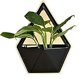 Bangxiu Wandbehang Blumentopf, geometrische Wand Dekor Container Hängende Pflanzer Vase Indoor Garten Dekoration für Sukkulenten, Air Plant, Mini Kaktus, Faux Pflanzen (Farbe : D)